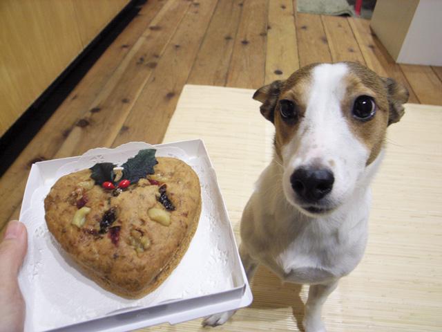 メリークリスマス犬ケーキ